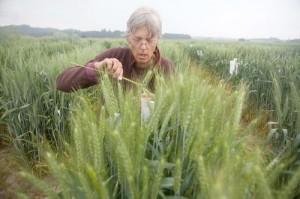 ug99-wheat-rust-science
