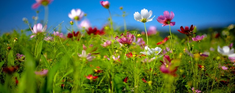 8871634-flower-field-summer