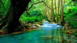 beautiful-forest-with-river-2