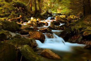 mountain_stream_in_forest_201604